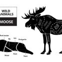 Why You Should Eat Moose Meat + Recipe